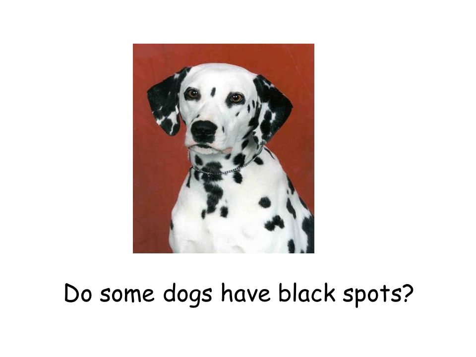 Do some dogs have black spots