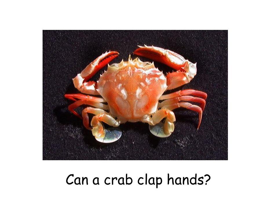 Can a crab clap hands