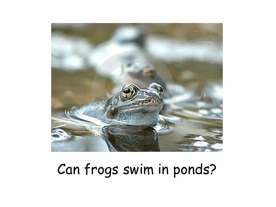 Can frogs swim in ponds