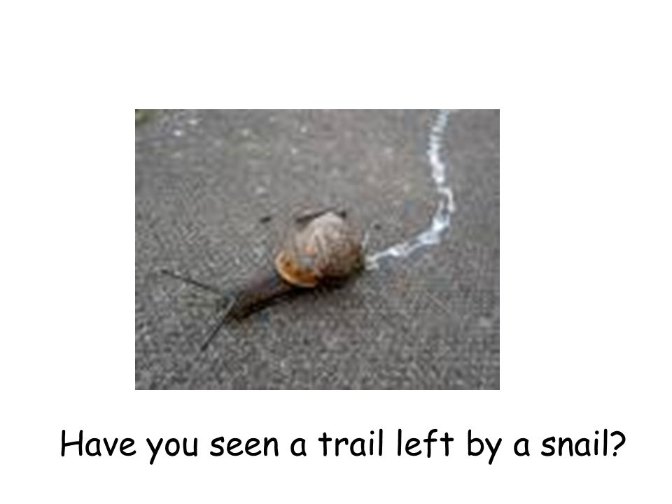 Have you seen a trail left by a snail