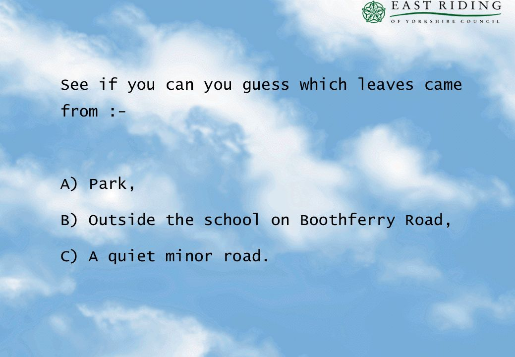 See if you can you guess which leaves came from :-