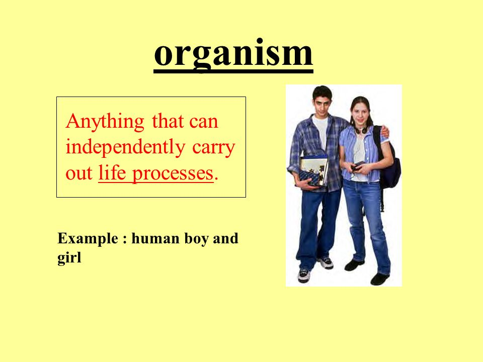 Cell Vocabulary Sections Ppt Video Online Download