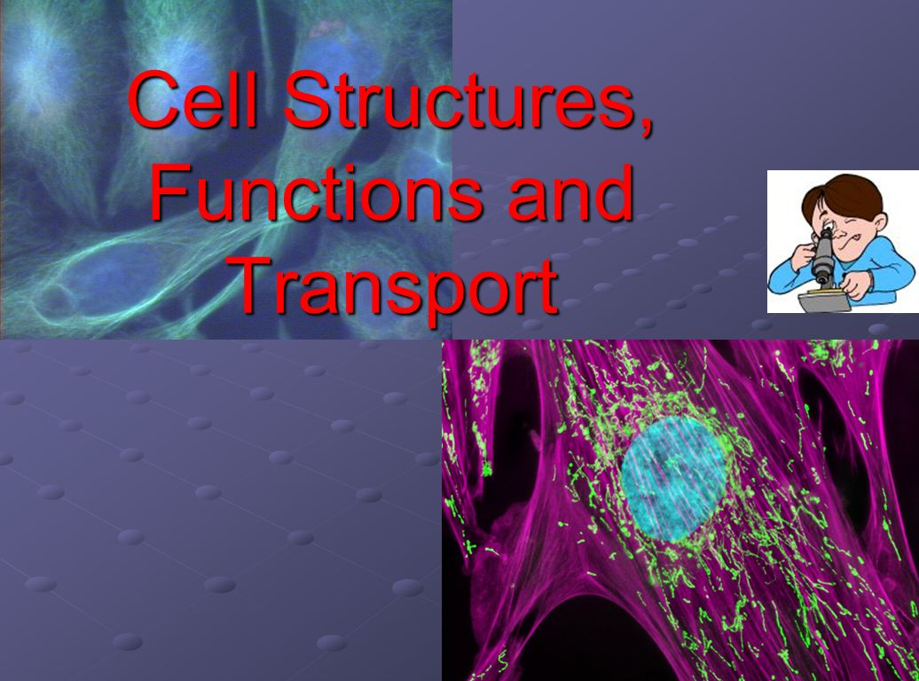 Cell structures and organelles worksheet