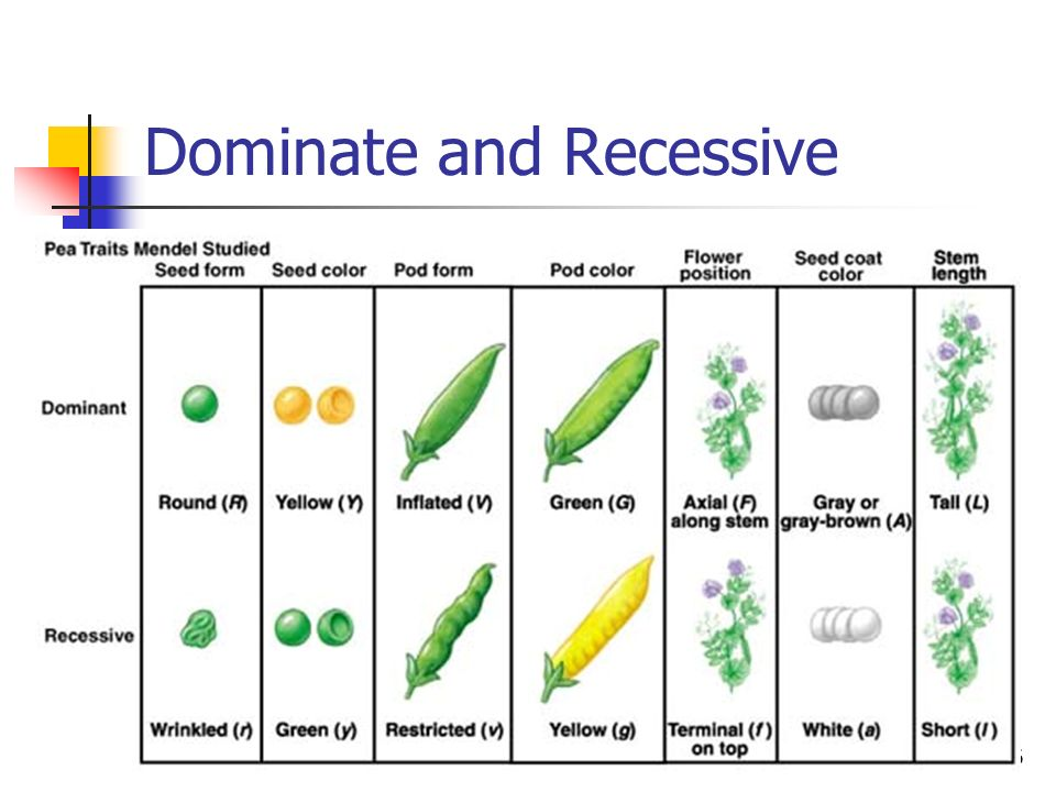 Dominate and Recessive