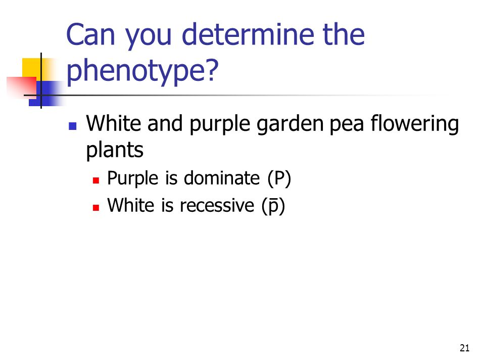 Can you determine the phenotype