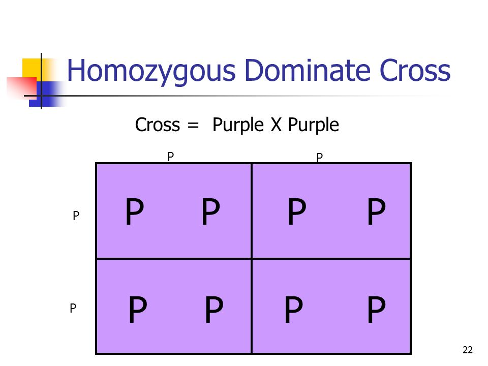 Homozygous Dominate Cross