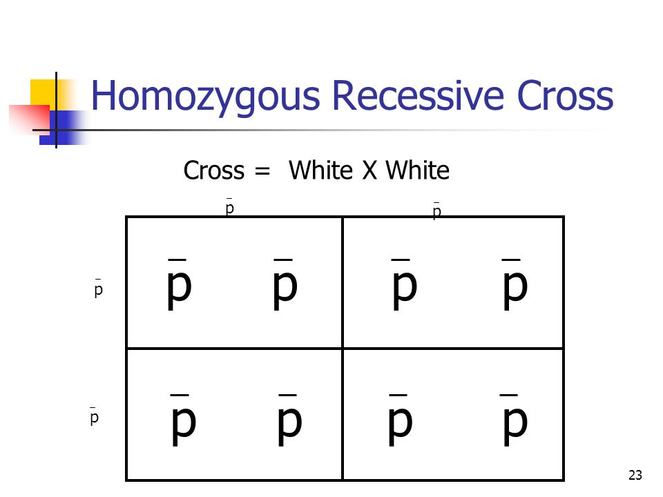 Homozygous Recessive Cross