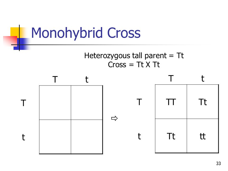 Heterozygous tall parent = Tt