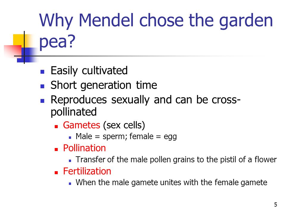 Why Mendel chose the garden pea