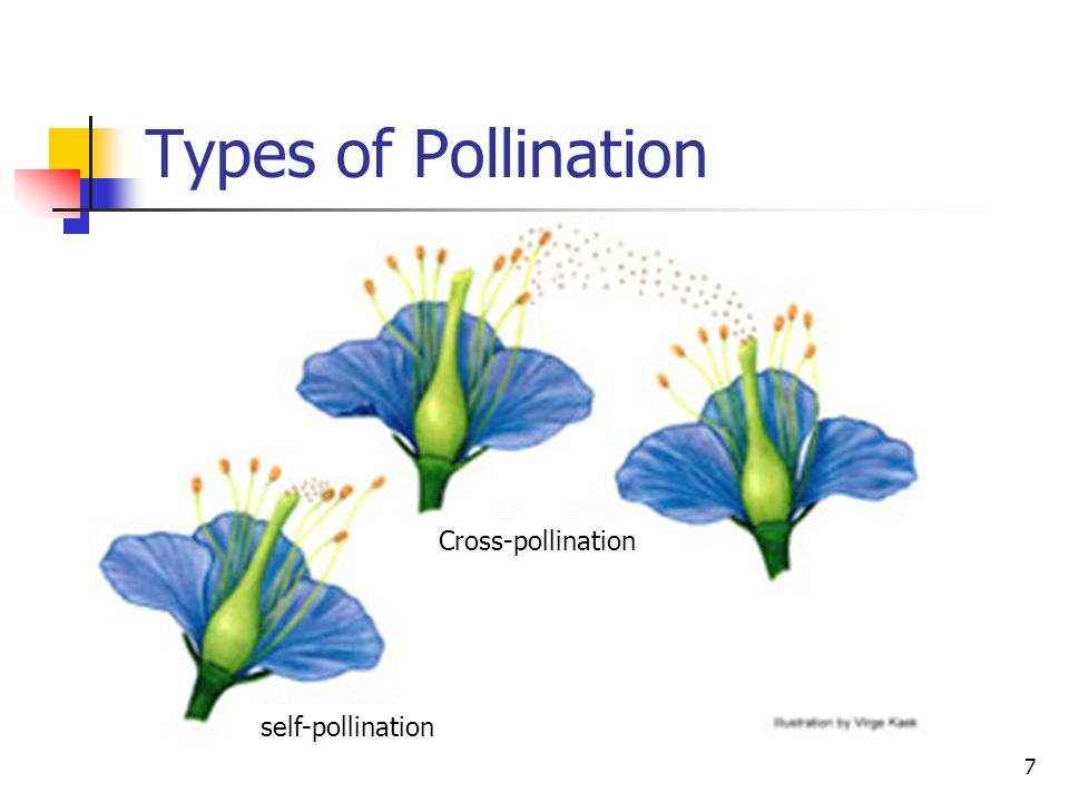 Types of Pollination Cross-pollination self-pollination