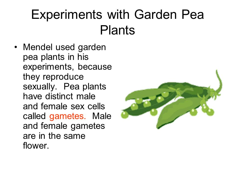 Experiments with Garden Pea Plants