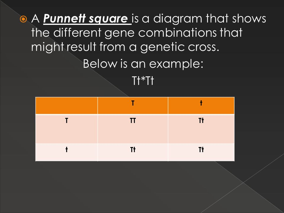 A Punnett square is a diagram that shows the different gene combinations that might result from a genetic cross.