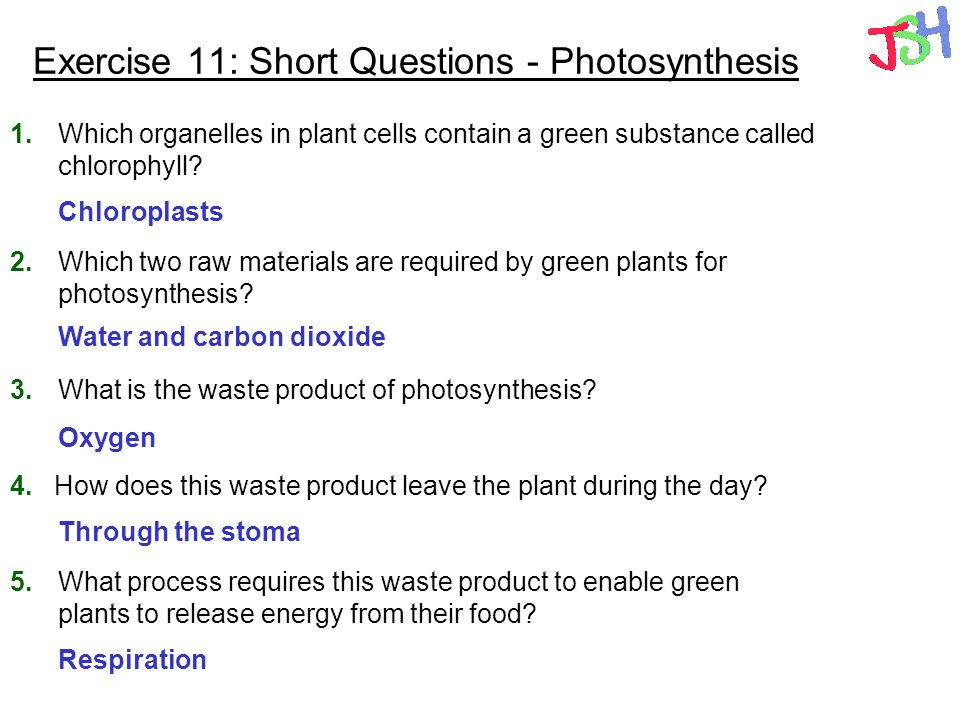Exercise 11: Short Questions - Photosynthesis