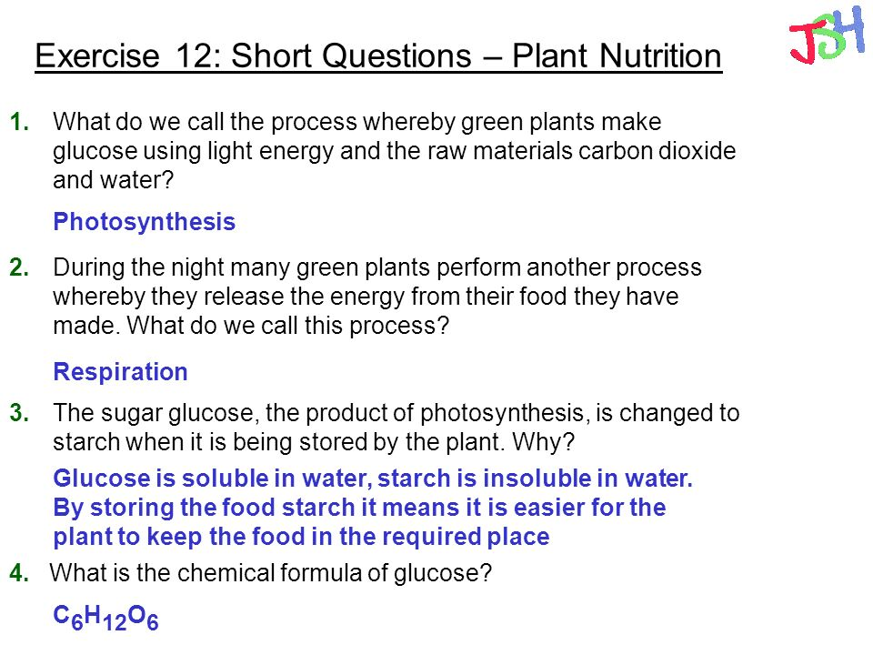 Exercise 12: Short Questions – Plant Nutrition