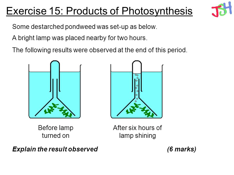 Exercise 15: Products of Photosynthesis