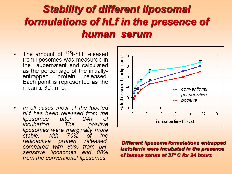 Stability of different liposomal formulations of hLf in the presence of human serum