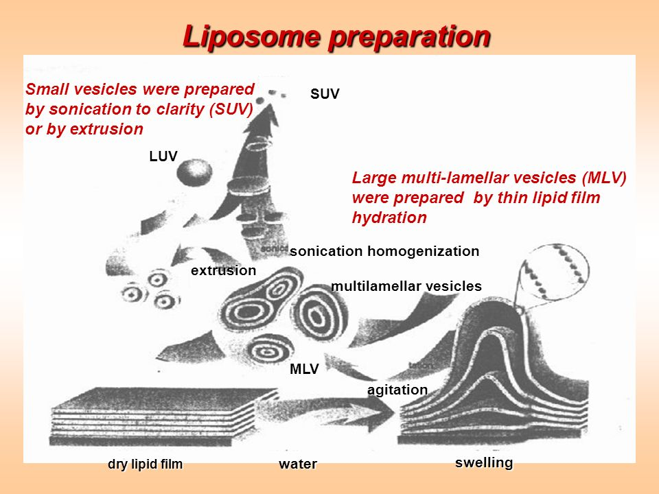Liposome preparation Small vesicles were prepared by sonication to clarity (SUV) or by extrusion. SUV.