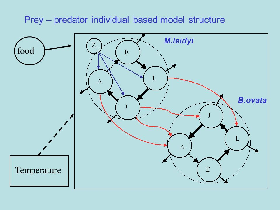 Prey – predator individual based model structure