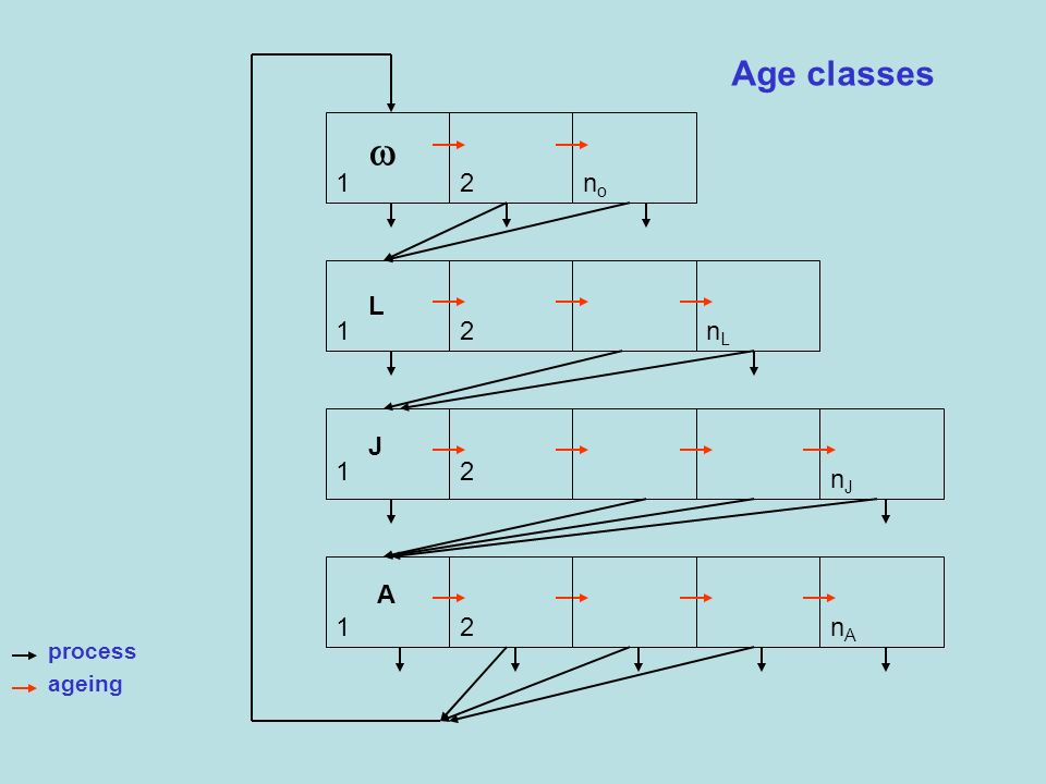 Age classes  1 2 no L 1 2 nL J 1 2 nJ A 1 2 nA process ageing