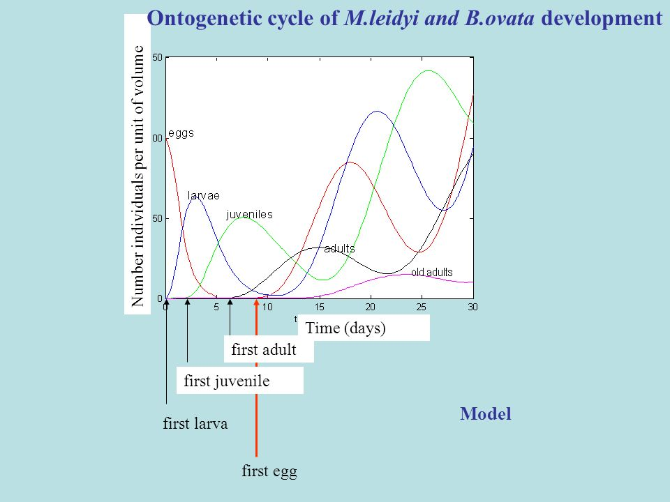 Ontogenetic cycle of M.leidyi and B.ovata development