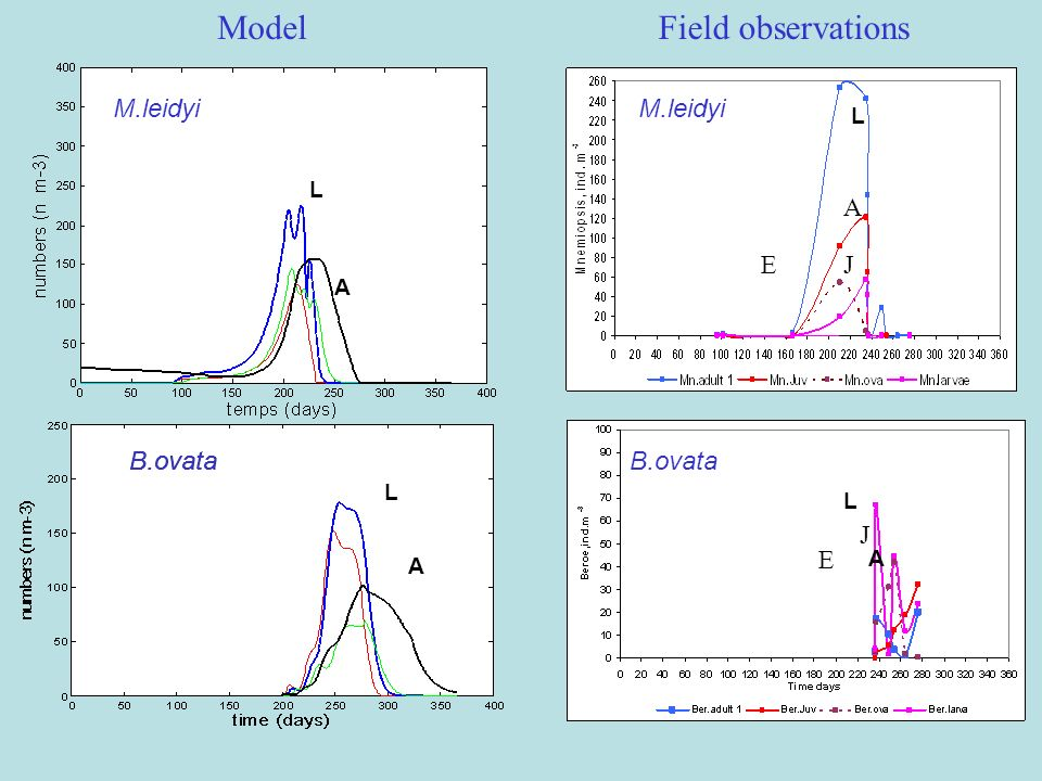 Model Field observations M.leidyi M.leidyi A E J B.ovata B.ovata