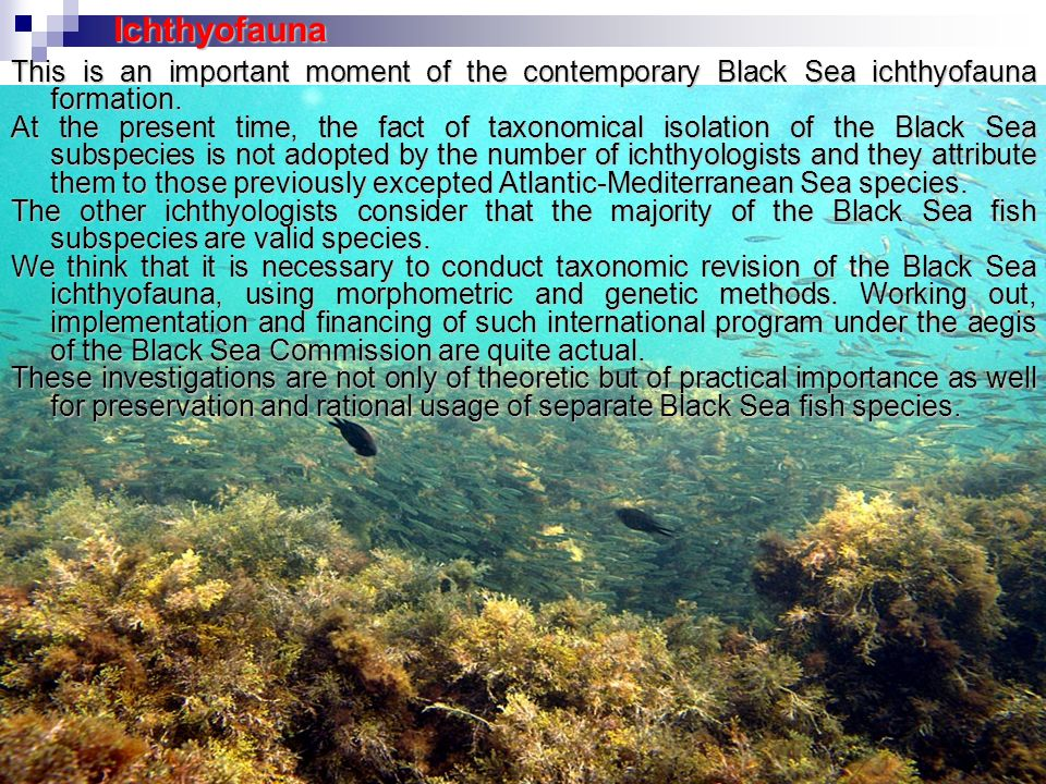 Ichthyofauna This is an important moment of the contemporary Black Sea ichthyofauna formation.