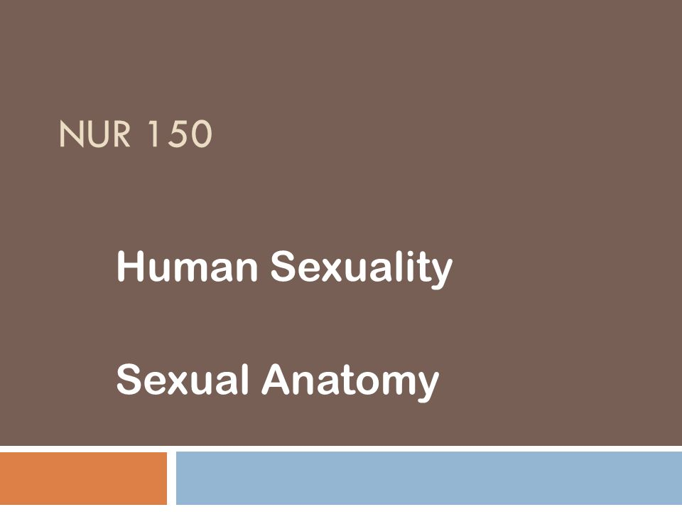 Human Sexuality Sexual Anatomy