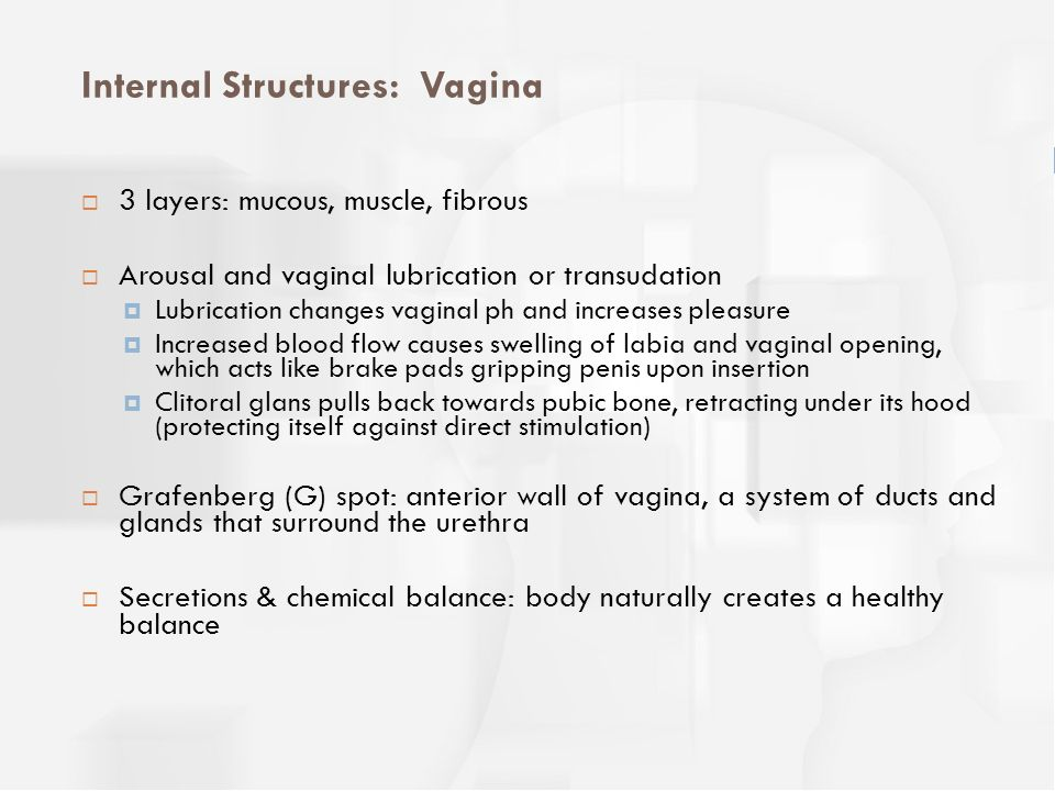 Internal Structures: Vagina