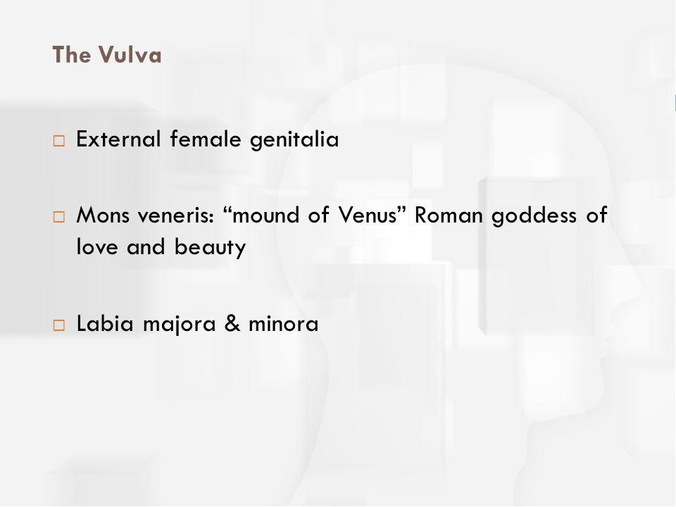 The Vulva External female genitalia. Mons veneris: mound of Venus Roman goddess of love and beauty.
