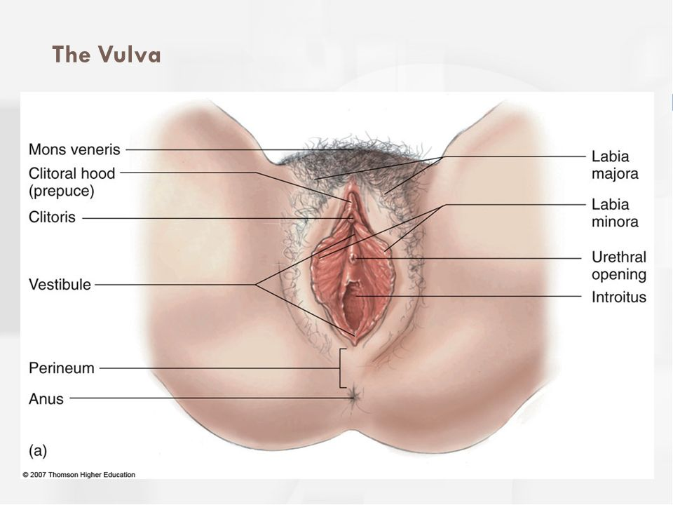 The Vulva The structures and variations of the vulva: (a) external structures and (b-d) different shapes and colors.