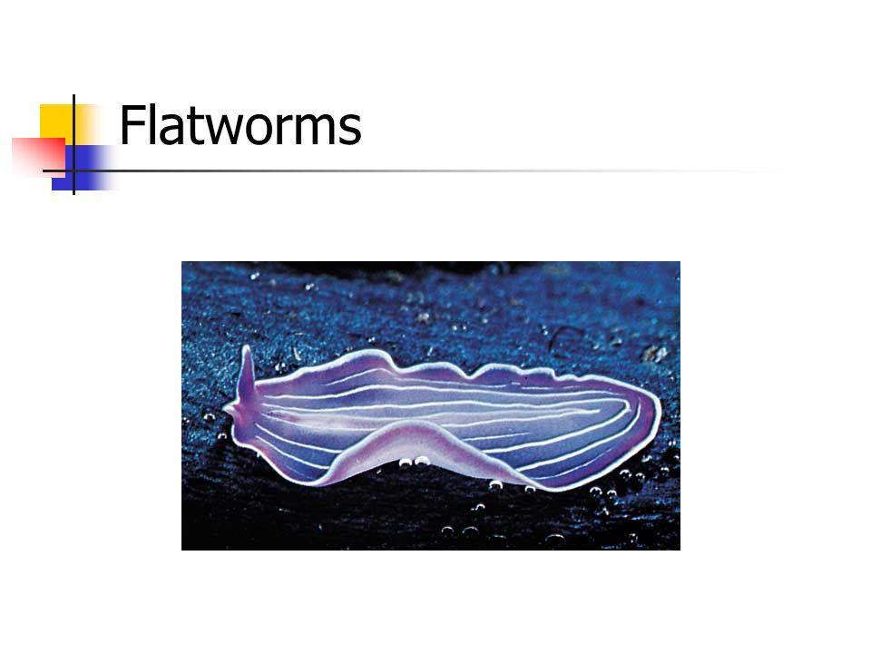 Invertebrates. - ppt v...