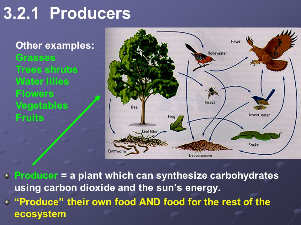Organisms That Synthesize Their Own Food Are Called