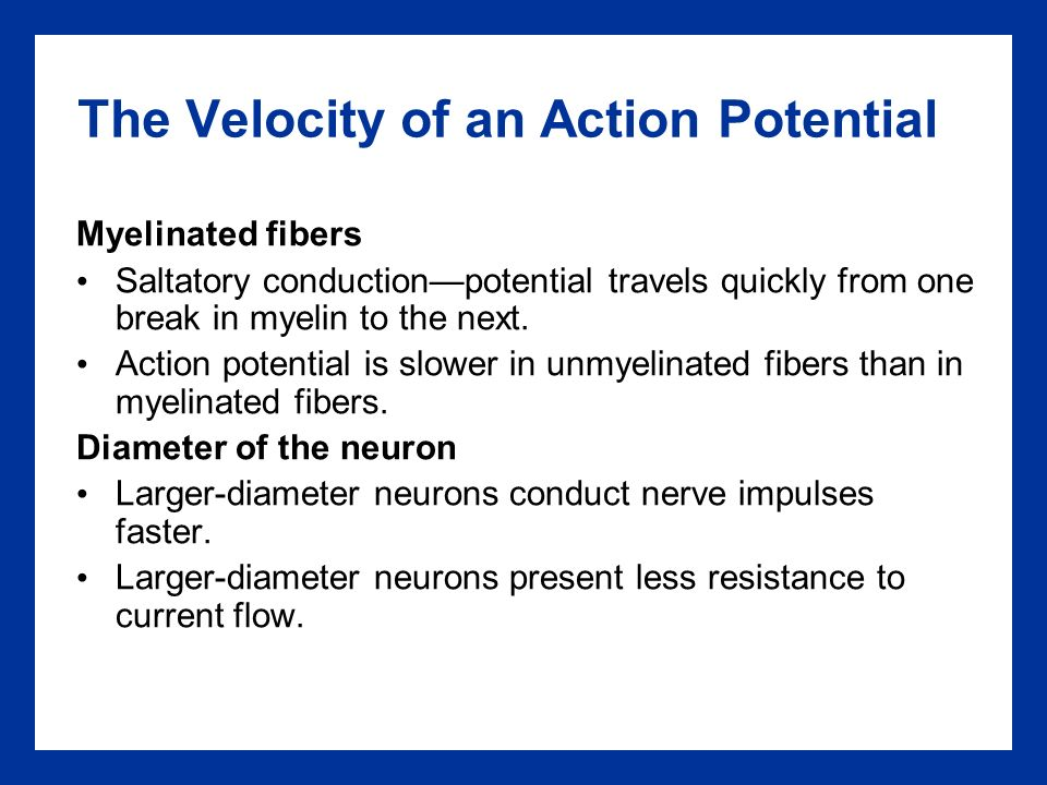 saltatory conduction refers to the conduction of impulses in The process is known as saltatory conduction and results in much faster  propagation of the nerve impulse compared to non-myelinated neurons (where  action.