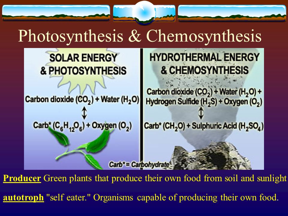 chemosynthesis organisms Chemosynthesis, and it describes the chemical  these organisms were self-sufficient and could directly synthesize nutrients with energy provided by the sun.