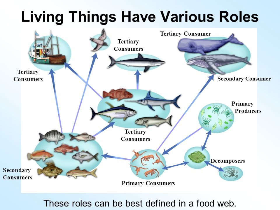 Life in a Coral Reef. - ppt video online download