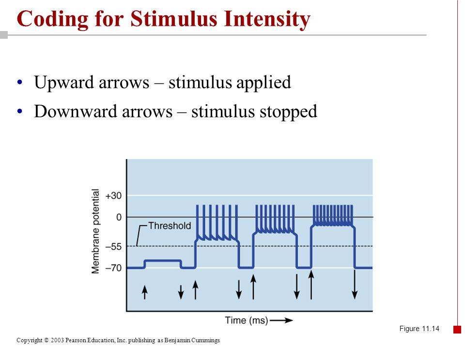 Coding for Stimulus Intensity