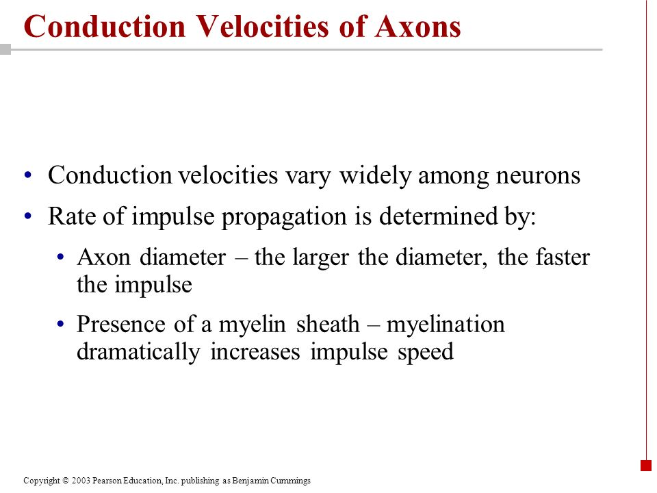Conduction Velocities of Axons