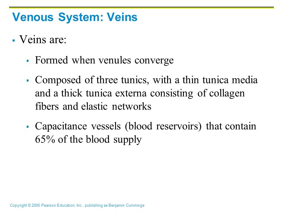 Venous System: Veins Veins are: Formed when venules converge