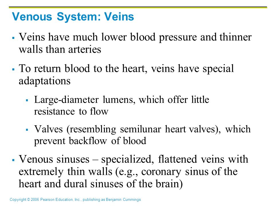 Veins have much lower blood pressure and thinner walls than arteries