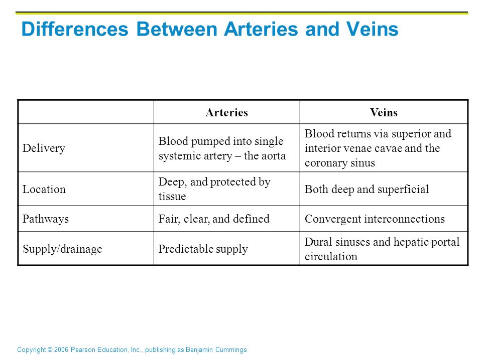 Differences Between Arteries and Veins