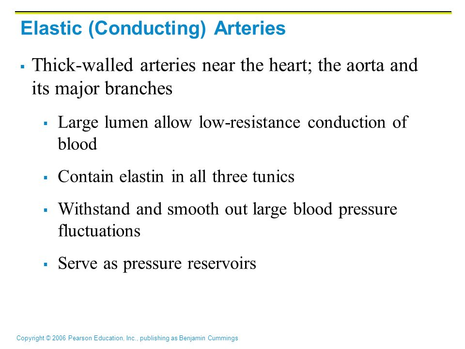 Elastic (Conducting) Arteries