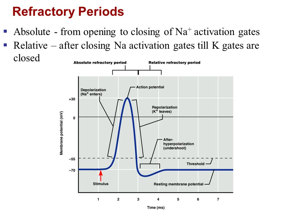 Refractory Periods Absolute - from opening to closing of Na+ activation gates.