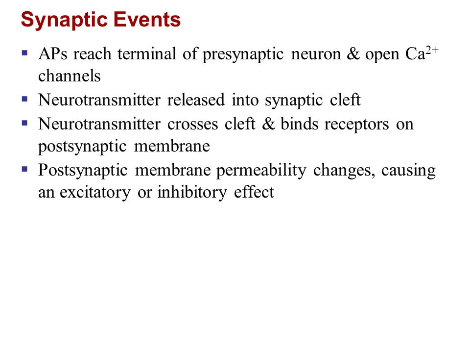Synaptic Events APs reach terminal of presynaptic neuron & open Ca2+ channels. Neurotransmitter released into synaptic cleft.