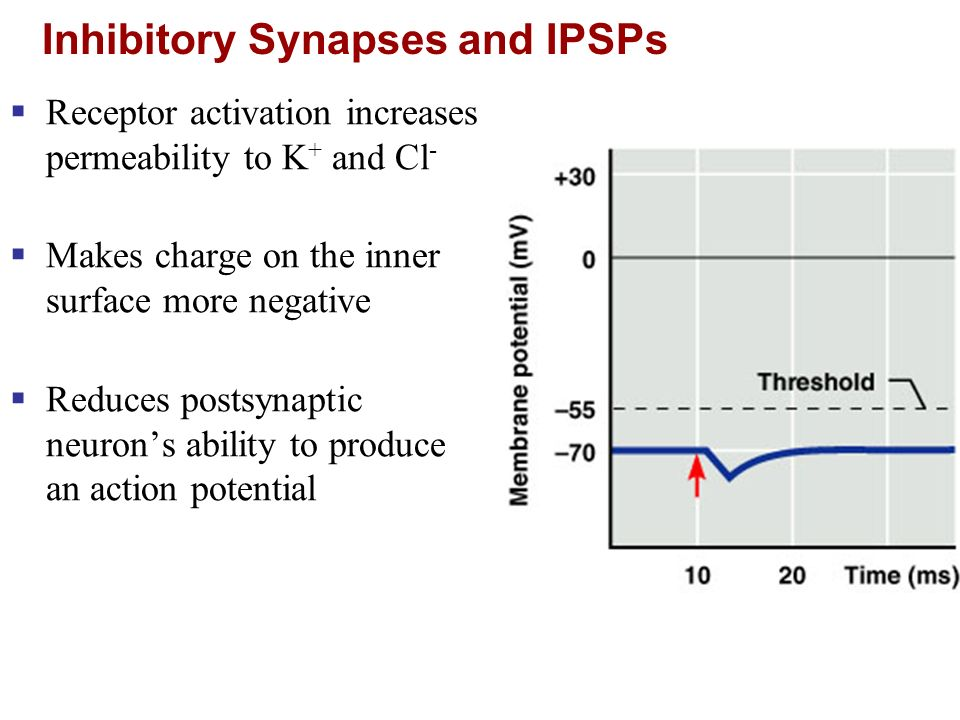 Inhibitory Synapses and IPSPs