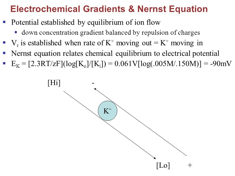 Electrochemical Gradients & Nernst Equation