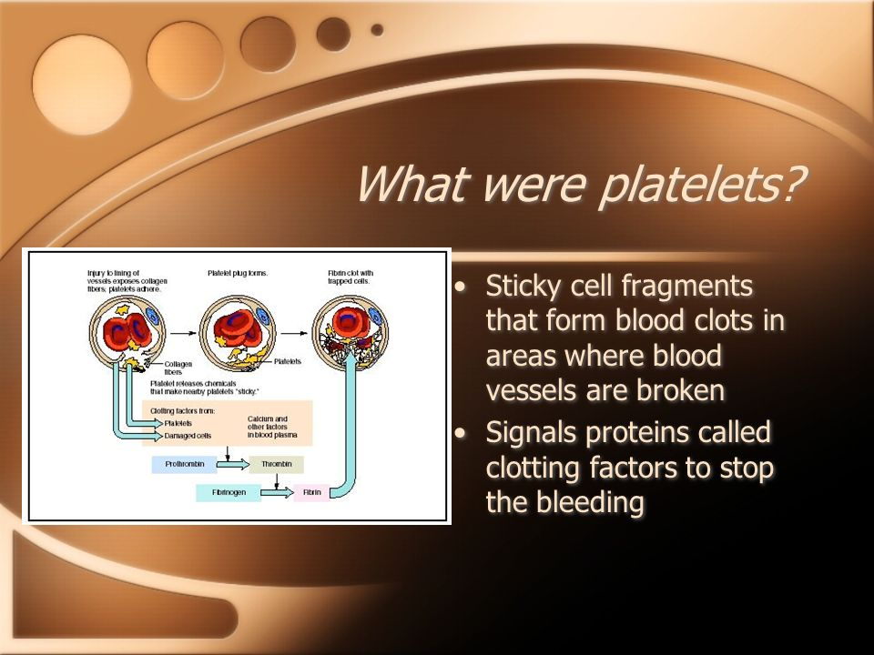 What were platelets Sticky cell fragments that form blood clots in areas where blood vessels are broken.