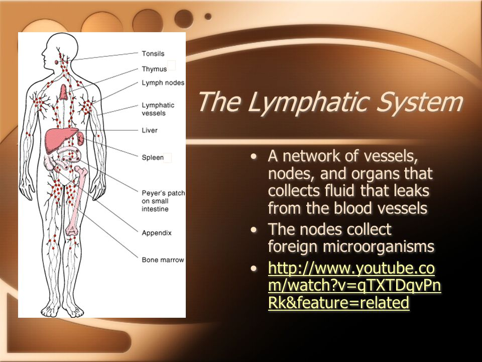 The Lymphatic System ★ ★