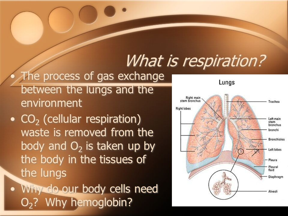 What is respiration The process of gas exchange between the lungs and the environment.