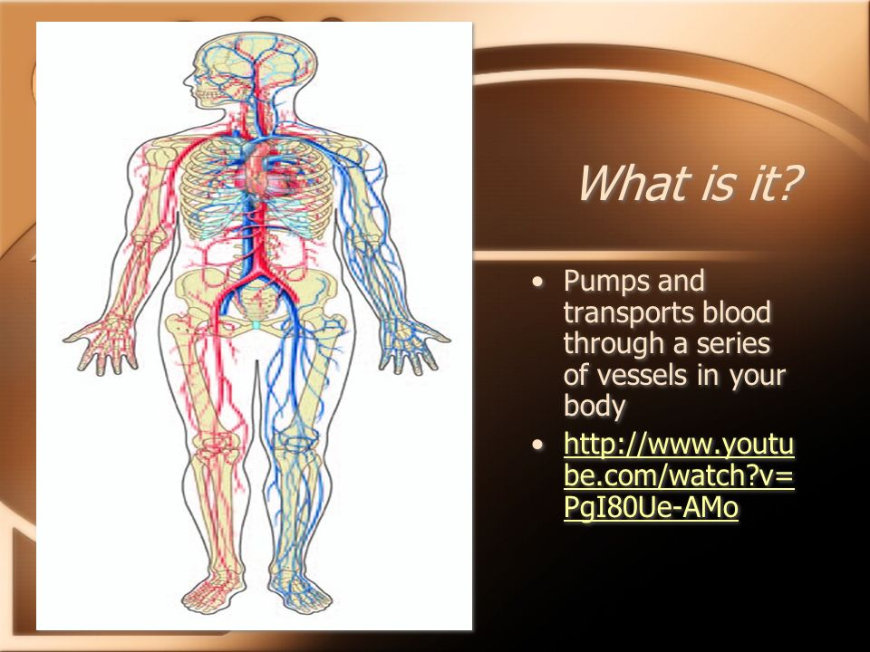 What is it. Pumps and transports blood through a series of vessels in your body.