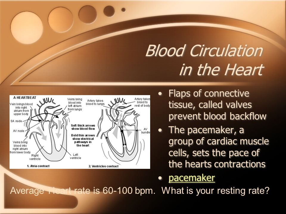 Blood Circulation in the Heart